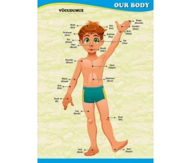 Our Body Poster